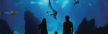 With 800 species of marine animals, S.E.A. Aquarium is the world's largest oceanarium.